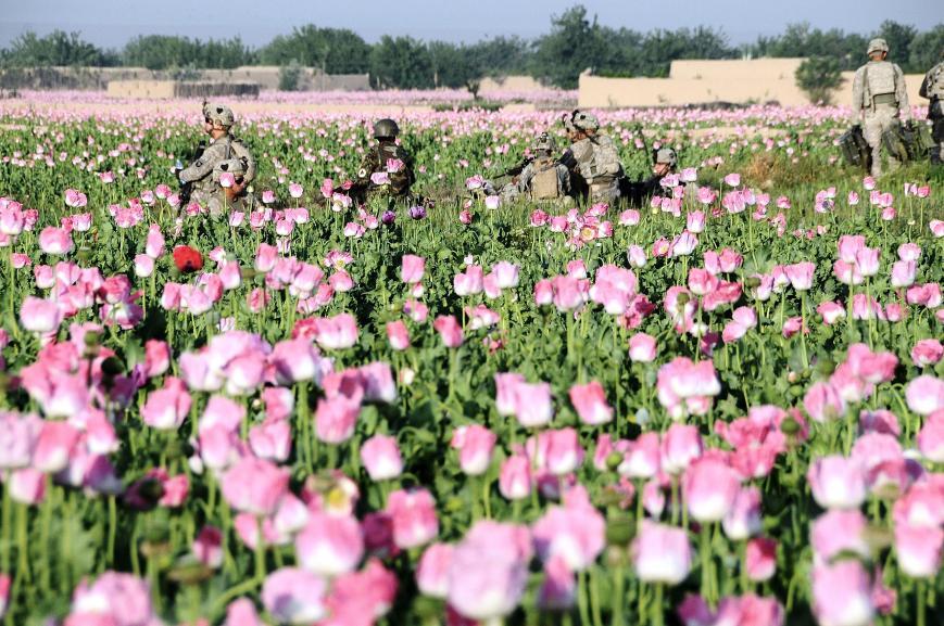 oppio afghanistan poppy