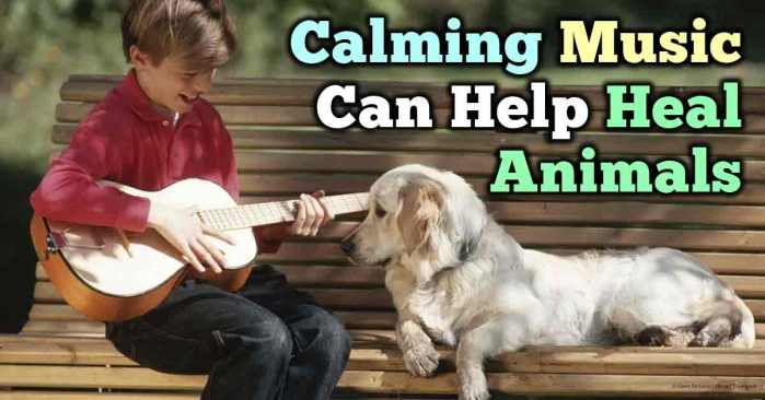 calming-music-heals-animals-fb