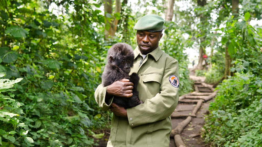 virunga gorilla ranger