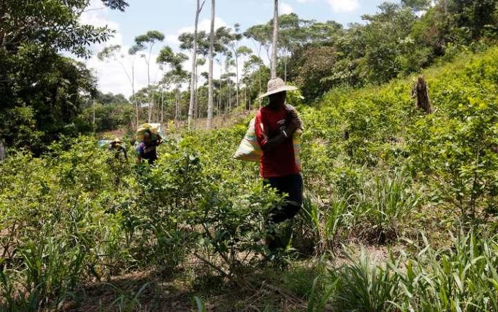 colombia coltivatori cocaina