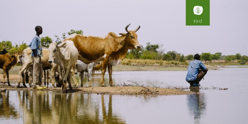 clima ambiente migrazioni