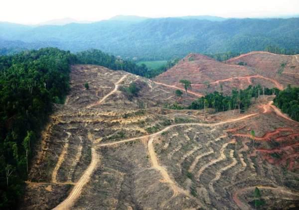sumatra-deforestation