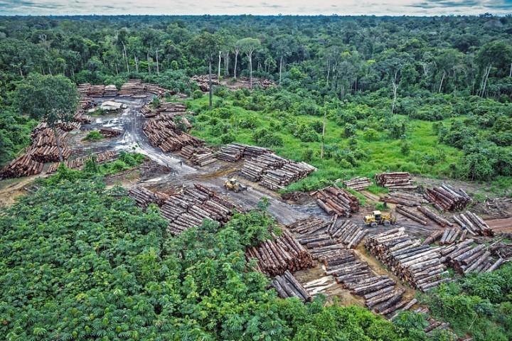 disboscamento illegale foresta