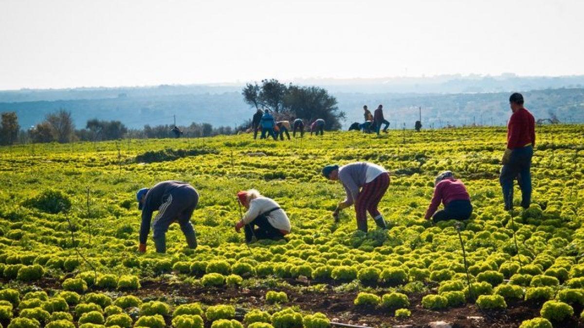 Lavoratori campi caporalato