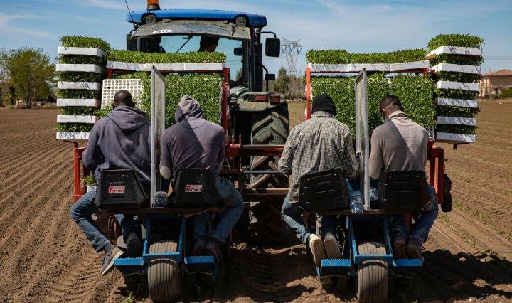 Migranti lavorano in un campo a Casal di Principe, Caserta, 16 aprile 2020